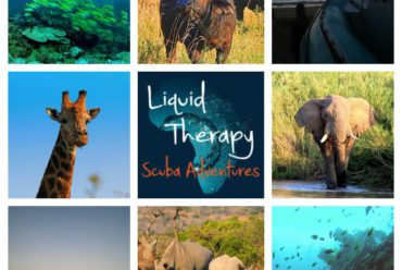 The new adventure of Liquid Therapy